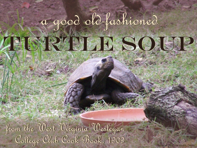 Turtle Soup, anyone?